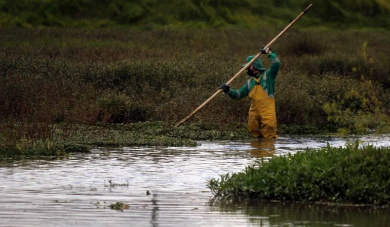Soacha continúa en procesos de restauración de sus humedales